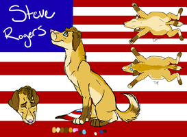 Canine Avengers .:Steve:. by Wolfchick36