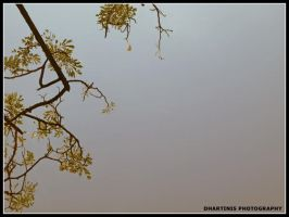 branches by dhartinis