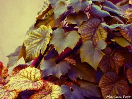 LOMO Leafs Project by mmariang