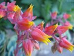 Cactus Flowers by doublehelix1033