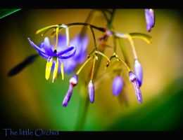 The little Orchid by calimer00