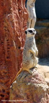 Isle Of Wight Zoo by Robynness