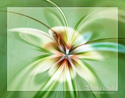 Painted Orchid by denise-g