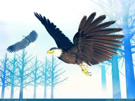 Let them fly free by rlcwallpapers