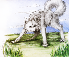 .:White Wolf:. by WhiteSpiritWolf