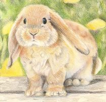 My Bunny Closeup by BellaRosie