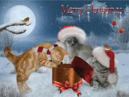 Kittens-and Christmas-3 by JaneEden