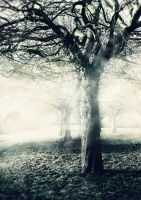 Trees in the Mist by MagpieMagic