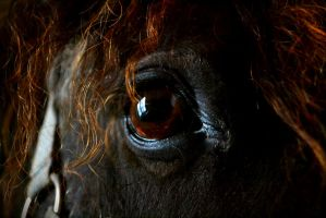 Eye of the horse by Mr-Goldfish