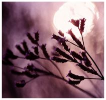 The Color Purple by BruceLeenna