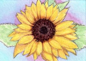 ATC - Sunflower for *whitetippedwaves by strryeyedreamr27