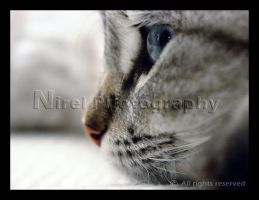 Cat's Profile by nirel