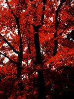 Scarlet Leaves by underneath-the-paint