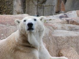 polar bear III by two-ladies-stocks