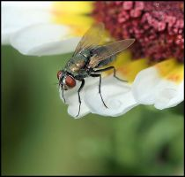 Fly Of Flower by craftworker