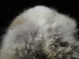 Rabbit Fur 33 by TRANS4MATICA