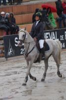 Grey Pony - Eventing Stock 1.26 by MagicLecktra