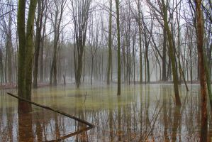 Mist and Swamp by Nookslider