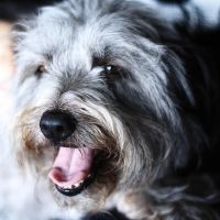 Mon Petit Chien by Lydia-distracted