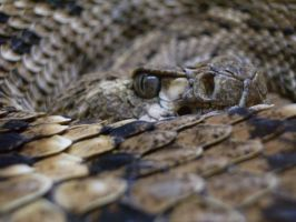 Slither by redheadpunk