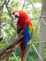 Parrot 1 by Seigner