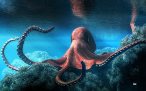 Octopus by deskridge