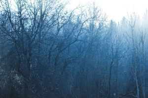 Blue Forest by Wuddie06