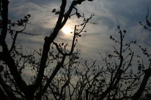 Sun and the Peach Trees by alazada9855