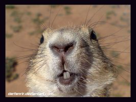 Prairie Dog Smile by DerFenrir