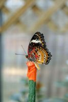Butterfly on a Stick by NamekAngelIvy