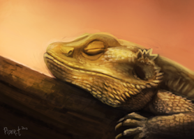 DAY 20. Photo Study - Beardie (35 Minutes) by Cryptid-Creations