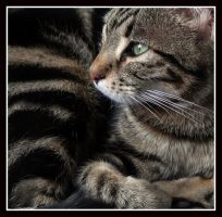 Compact Cat by kanes
