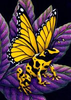 Yellow Poison Fairy Frog by TabLynn