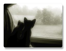 Kitties Watching Rain by barefootphotos