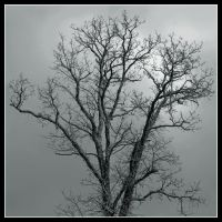 Snowtree. 800-1376, with story by harrietsfriend