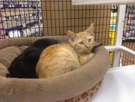 petsuper market cats of the day by michelous