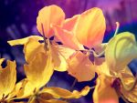 yellow flowers make my gloomy days brighter by byjangel