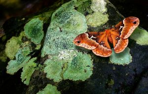 Moth and Lichen by dancingeyes