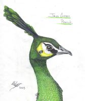 Java Green Peacock by MudstarMord-Sith