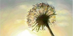Dandelion by j-witless