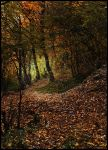 Path in the woods by VesnaRa14