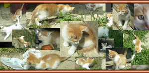 Orange Twin Kitty collage by LovePikaNizzy