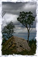 Rock Tree Hill Country Texas by DleeKirby