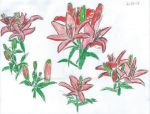 Asiatic lilies 6-21-13 by Justyn16