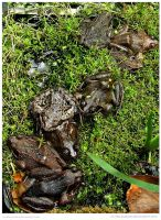 Love This Pile Of Frogs by In-the-picture