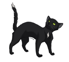 Ravenpaw by tigon