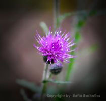 Flower in the wild. by SallokcaB
