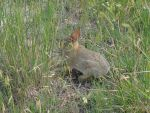Rabbit in Badlands by Snail97