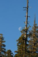 Moon behind the Redwoods by RayMackenzie