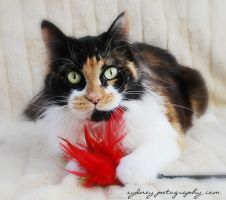 Pound Cats 4809 by sydneypetography